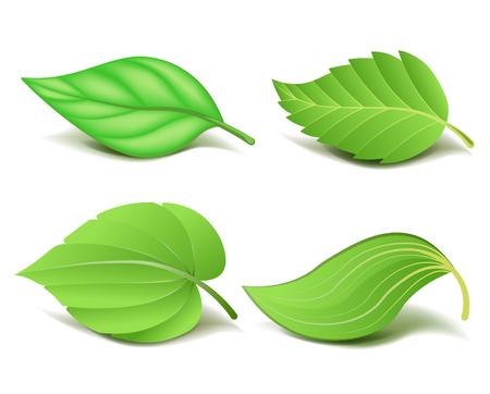 現実的な緑のコレクションの葉セット。ベクトル