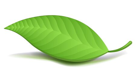 vegetate: Realistic Green Leaf. Vector Illustration isolated Stock Photo