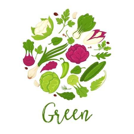 그린 샐러드와 신선한 야채 또는 건강 한 다이어트 음식 성분에 대 한 조미료 허브 포스터. 벡터 시금치, 오이 및 고추, 양배추 또는 양파와 파 슬 리, ar