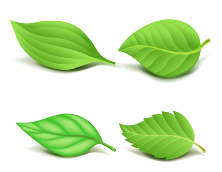 greenery: Collection of Realistic Green Leaves Set.