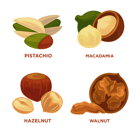 Ripe nuts and seeds vector illustration. Illustration