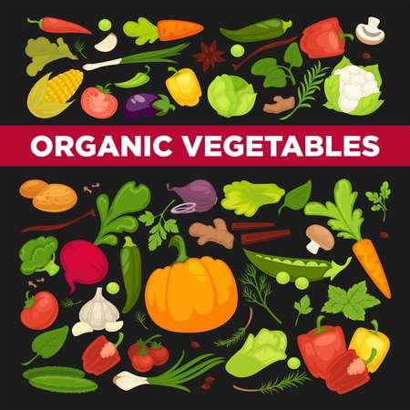 Organic vegetables fresh veggies, salads spice natural herbs vegetarian nutrition vector food