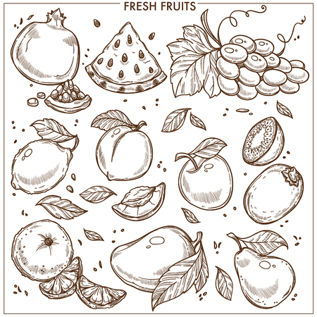Fruits sketch icons