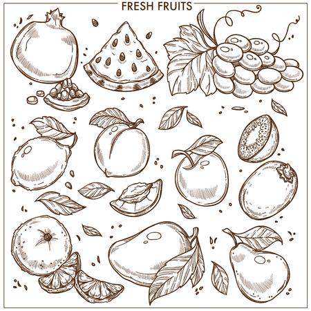 Fruits sketch icons Illustration