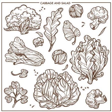 Salade sla en kool groenten schets iconen. Vector geïsoleerde witte bloemkool of broccoli kool, ijsbergsalade blad en eikenblad of zuring, spinazie en waterkers cole en boerenkool groenten