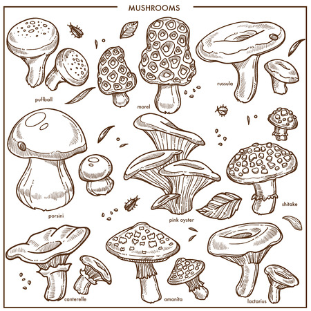 Mushrooms sketch icon set on white background, vector illustration.