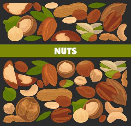 Delicious nutritious nuts vector illustration