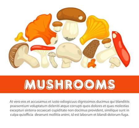 Ripe forest mushrooms of all edible species on promotional poster with sample text. Illustration