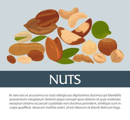Nuts organic nutrition and raw diet information poster design template.