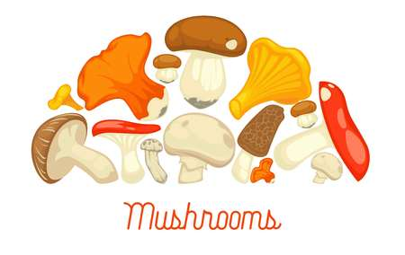 Edible mushrooms poster. Vector flat champignon and boletus or forest chanterelle and lobster mushroom, exotic maitake or matsutake and shiitake, morels and russula or gourmet truffle