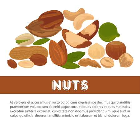 Nuts and raw diet information poster design template vector illustration Illustration
