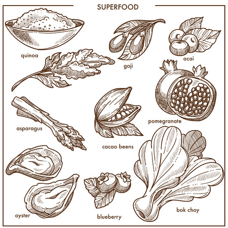 Superfood healthy diet food sketch icons berry, fruits and vegetables, bean seeds or seafood Illustration