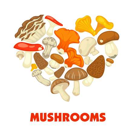 Mushrooms edible mushrooming poster. Vector flat champignon and boletus or forest chanterelle and lobster mushroom. 向量圖像