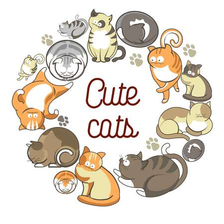 Cute cats with fluffy fur that lies in circle