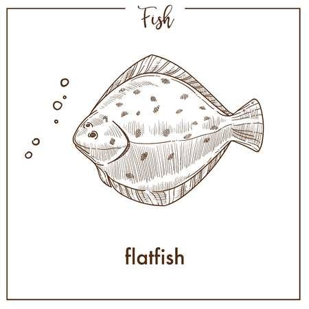 Flatfish sketch fish vector icon of flounder or plaice