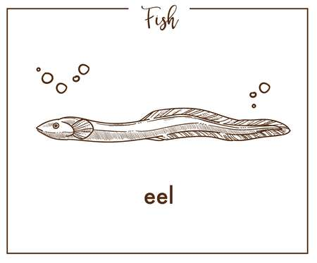 Eel sketch fish vector icon or conger