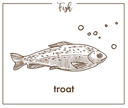 Trout sketch fish vector icon of salmon Illustration