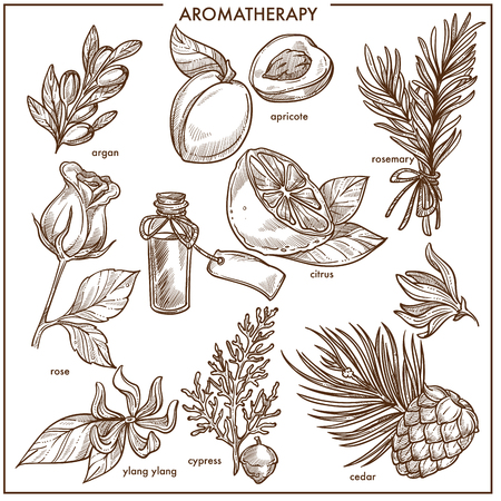 Aromatherapy natural ingredients monochrome isolated sketch illustrations set
