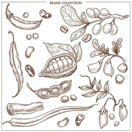Natural organic fresh beans isolated monochrome illustrations collection Banque d'images - 97551214