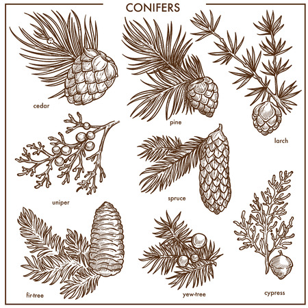 Natural conifers small branches isolated monochrome illustrations set Ilustração