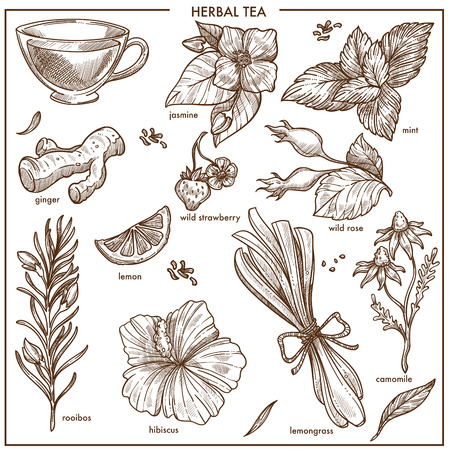 Herbal tea natural ingredients isolated monochrome illustrations set