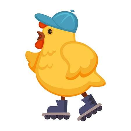 Plump chicken in blue cap on walk in roller skates.
