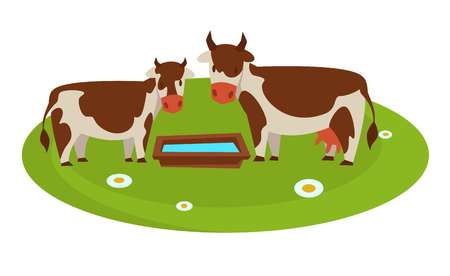 Cows with wooden trough full of water on grass field with chamomiles. Domestic that produce milk. Livestock from farm on pasture isolated cartoon flat vector illustration on white background. 矢量图像
