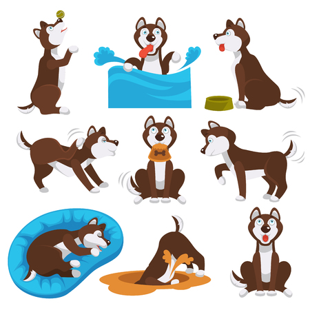 Husky dog pet playing. Vector cartoon character of husky dog puppy swimming, playing or digging bone or eating and training with ball