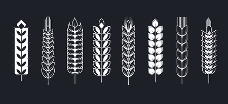 Spikelets icons for whole grain cereal or gluten free product logo templates. 일러스트