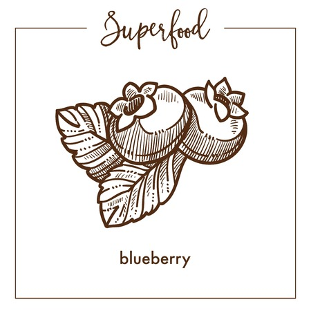 Ripe sweet blueberry with leaves monochrome superfood sketch.