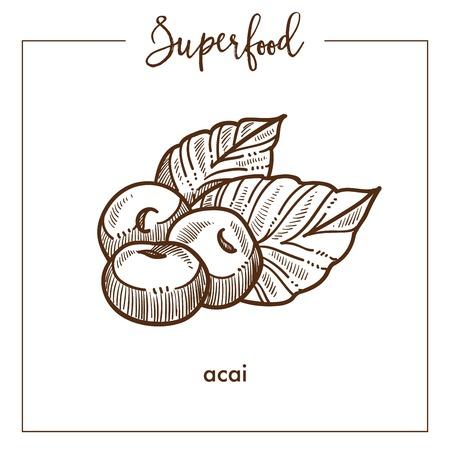 Delicious healthy acai monochrome superfood sepia sketch.