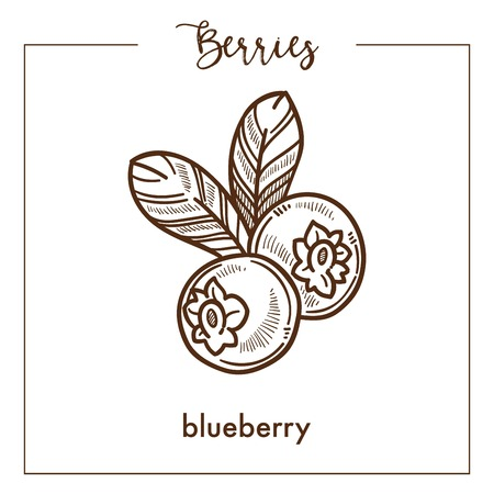 Tasty blueberry with leaves monochrome berry sepia sketch. Healthy natural food full of vitamins. Delicious ripe fruit from bush isolated cartoon flat vector illustration on white background. Illustration