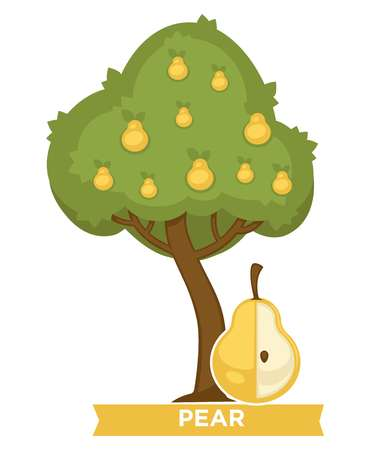 Pear tree full of ripe juicy fruits in thick foliage. Delicious natural food grown in orchard. Healthy product that contains lot of vitamins isolated cartoon vector illustration on white background. Иллюстрация