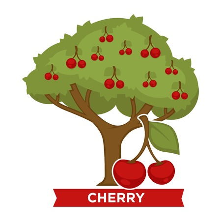 Cerisier aux baies mûres sur un feuillage épais. Délicieux aliments biologiques cultivés à la ferme. Plante verte recouverte de fruits sucrés isolé illustration vectorielle plane dessin animé sur fond blanc.