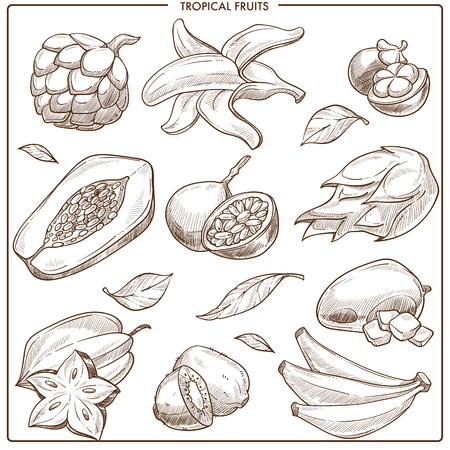 Tropical exotic vector sketch fruits