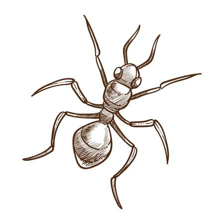 Ant closeup monochrome sketch outline, small insect with sting, that usually lives in complex social colony with one or more breeding queens. Wingless animal isolated on white vector illustration