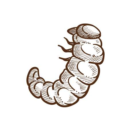 Larva harmful insect monochrome outline sketch. Caterpillar with small legs, parasite for fields and crops of farmers in the summer time. Products destroyer isolated on white vector illustration Illusztráció