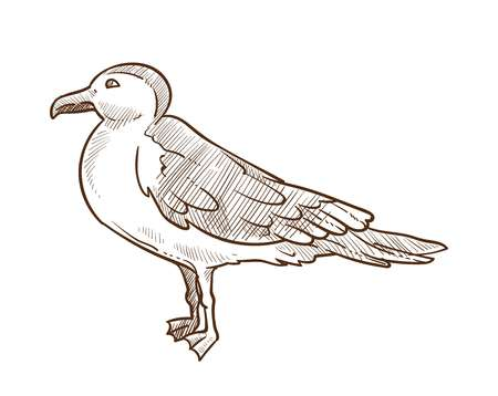 Seagull bird monochrome sketch outline icon isolated on white. Fauna flying animal with wings and feathers. Bird vector illustration of feathered gull front view hand drawn by pencil, clipart design