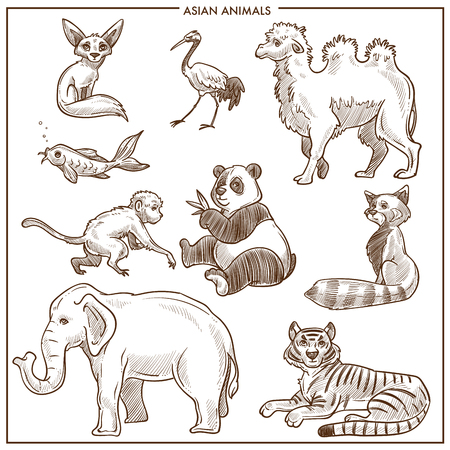 Asian animals and birds sketch. Vector isolated camel dromedary or panda and koala, elephant or tiger and golden fish with monkey or fennec fox and stork for zoo or zoological park design