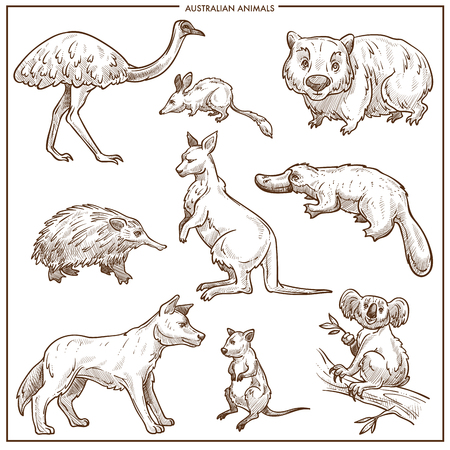 Australian animals and birds sketch. Vector isolated Emu ostrich, kangaroo or Dingo dog and platypus or mouse, koala and echidna and Tasmanian devil for zoo or zoological park design