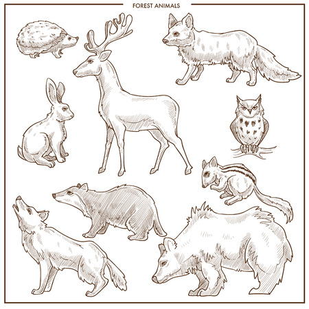 Forest animals and birds sketch. Vector isolated bear, wolf or fox and wild bear, owl or hedgehog and squirrel or chipmunk, deer or elk for zoo or zoological park design Иллюстрация