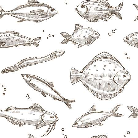 Fish sketch pattern background. Vector seamless design of river carp, ocean flounder or sea herring, eel with tuna or catfish and trout fishes