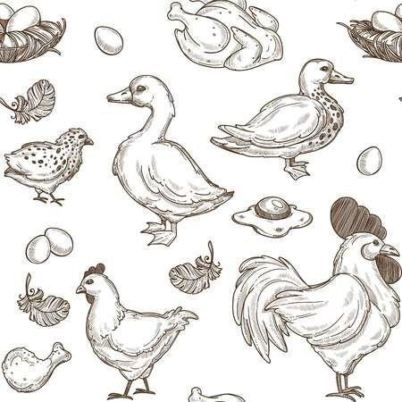 Poulet et canards croquis de fond. Volaille de volaille de ferme sans soudure de vecteur de poule et coq avec oie, plume de poussins et oeufs en omelette