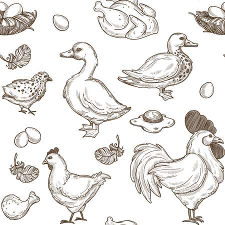 Chicken and ducks sketch pattern background. Vector seamless farm poultry fowl of hen and cock with goose, chicks feather and eggs in omelet