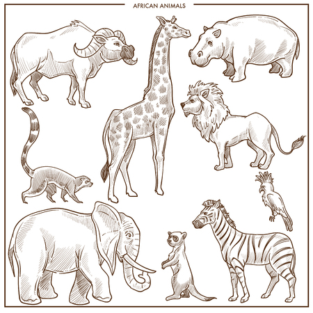 African animals and birds sketch. Vector isolated buffalo ox, giraffe or hippopotamus and lion, elephant or zebra and parrot with lemur for zoo or zoological park design Vetores