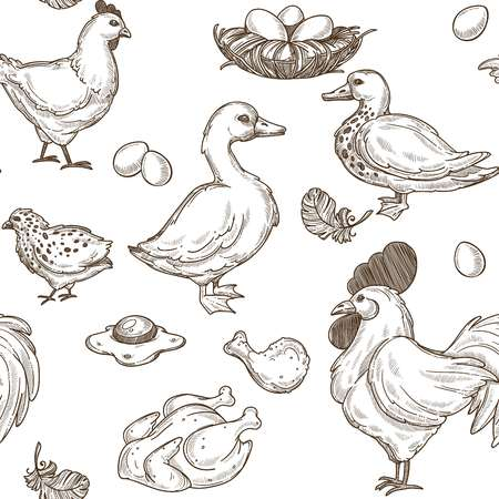 Farm with geese and hens, rooster and eggs pattern vector Vector Illustration