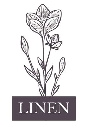 Linen natural production, plant with flowers and leaves Ilustração