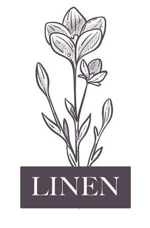 Production naturelle de lin, plante à fleurs et feuilles