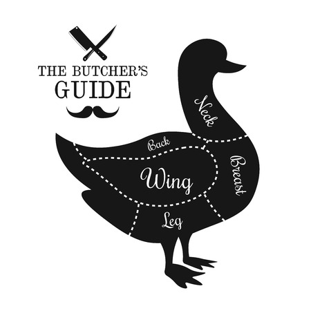 Poultry, game, duck meat cut lines diagram on the outline of a bird, butcher shop, market poster design, graphic black and white flat vector illustration