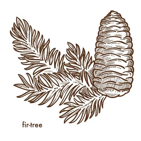 Firtree branch and cone composition, plant isolated icon vector. Christmas holidays symbol and decoration in winter season. Natural decor, botanic biodiversity with foliage of forests and woods